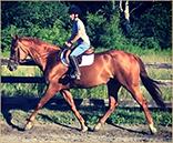 Reg. Appaloosa for sale