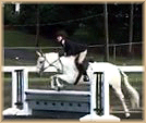Be Dazzled pony for sale