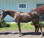Princeville, pony for sale