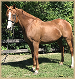 Snug Harbor horse for sale or lease